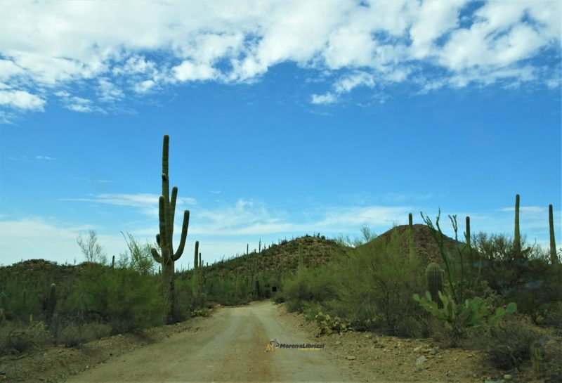 SAGUARO National Park…puro Wild West nel sud ARIZONA