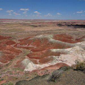 PETRIFIED FOREST National Park: tra paesaggi lunari e Deserto Dipinto
